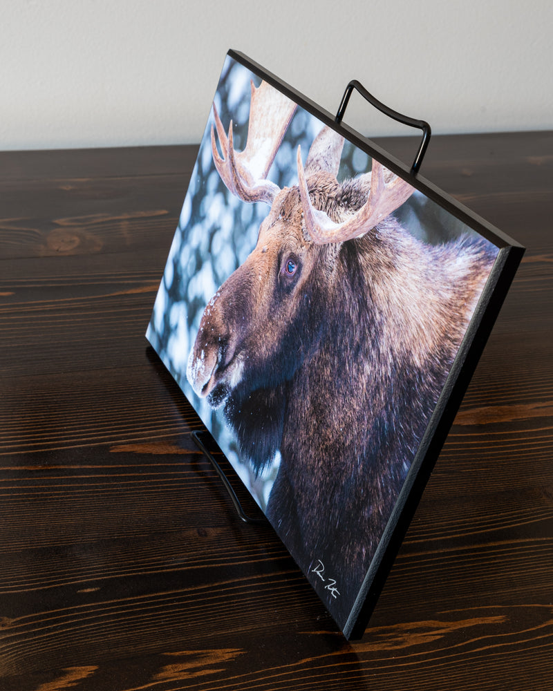 Bull moose wall art photography