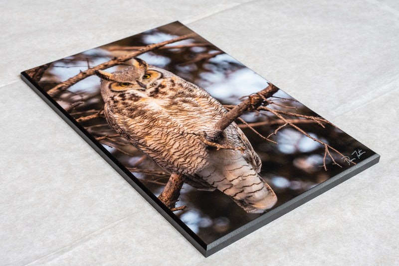 Great horned owl, wildlife wall art, wall hanging