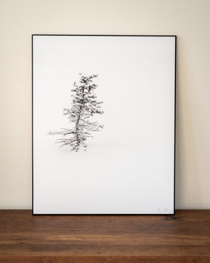 Spruce tree in snow wall art sample