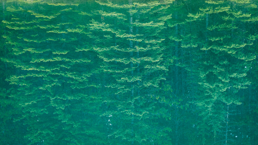 Reflection of a spruce forest in Two Jack Lake, Banff Alberta, landscape photography