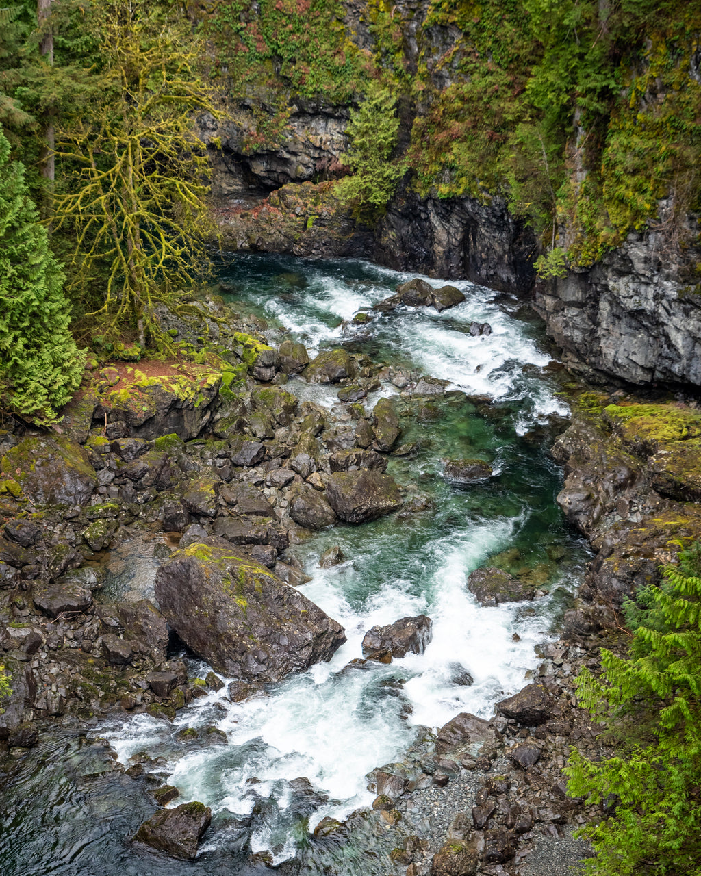 Campbell River rapids and whitewater below Elk Falls