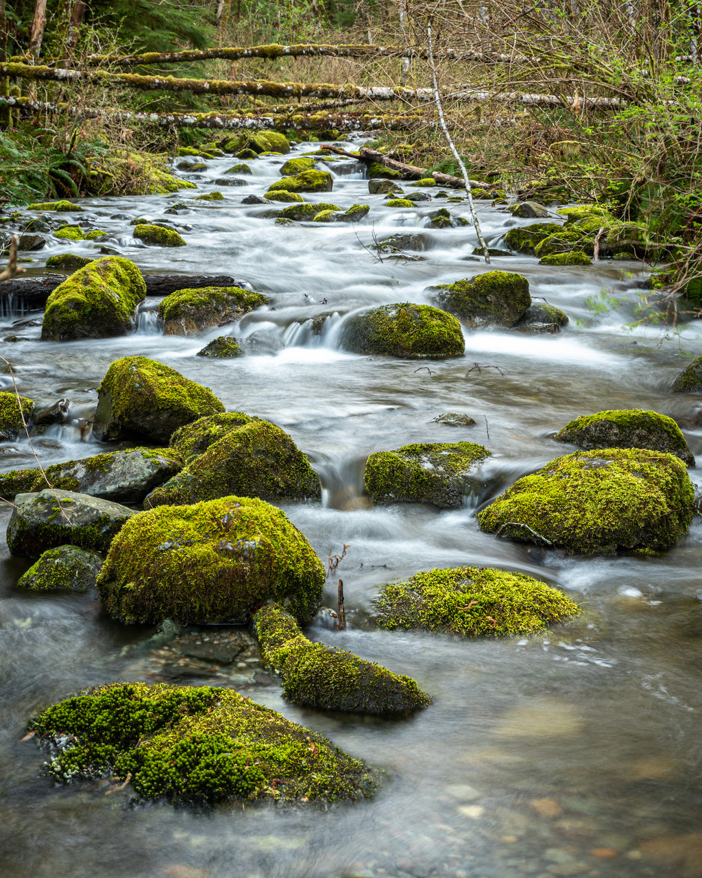 Small creek flows past moss covered rocks on Quadra Island, British Columbia