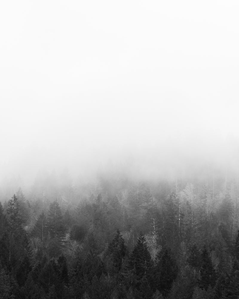 Mist rises over forest on a foggy morning, Vancouver Island, black and white photography