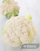 SEEDS CAULIFLOWER ALL YEAR ROUND HYBRID