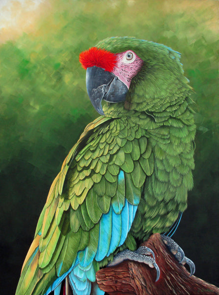Military Macaw Portrait, Acrylic Painting by Debra Dickson Artist