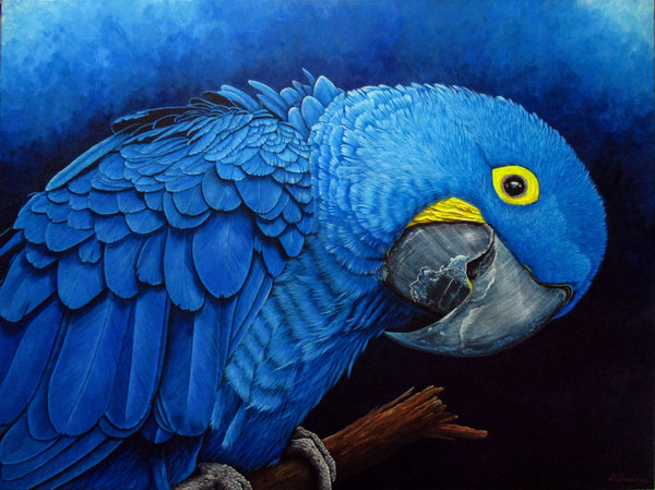 """Blu"" Hyacinth Macaw Portrait - Limited Edition Giclee Print - Art Selectors Gallery"