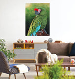 Military Macaw Portrait Limited edition giclee print, Limited Edition Print by Debra Dickson Artist