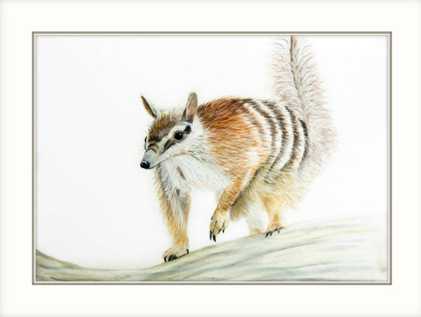 Numpty - Numbat - Fine Art Print, Limited Edition Print by Johanna Larkin Artist