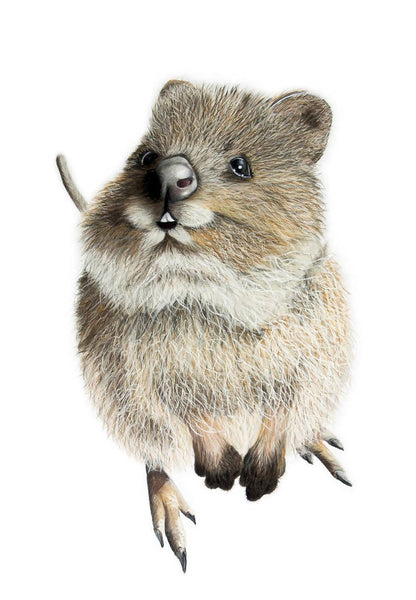 Barney the Quokka - Original Painting, Mixed Media Painting by Johanna Larkin Artist