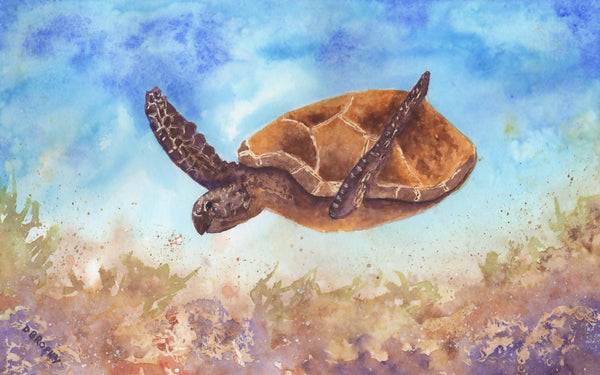 Turtle, Watercolour Painting by Debbie Brophy Artist