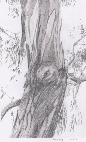 Tree No.1, Pencil Drawing by Debbie Brophy Artist