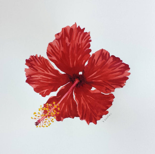 Red Hibiscus Flower (small format), Watercolour Painting by Debbie Brophy Artist
