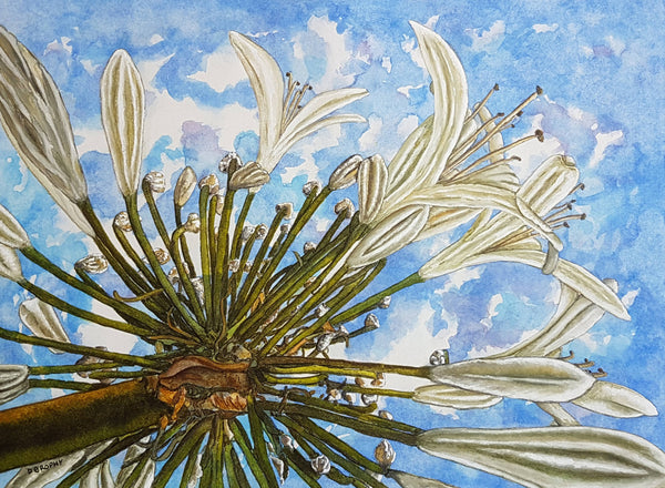 Agapanthus In The Sky, Watercolour Painting by Debbie Brophy Artist