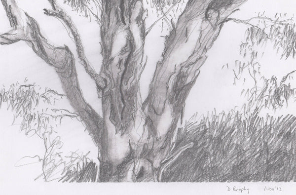 Tree No.2, Pencil Drawing by Debbie Brophy Artist