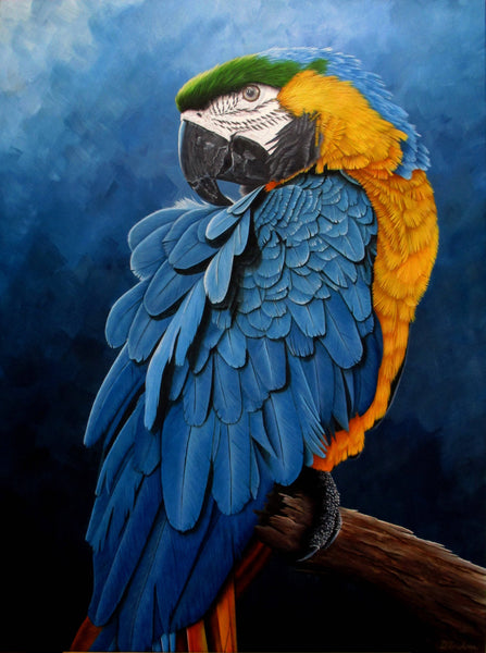 Blue and Gold Macaw Portrait, Acrylic Painting by Debra Dickson Artist