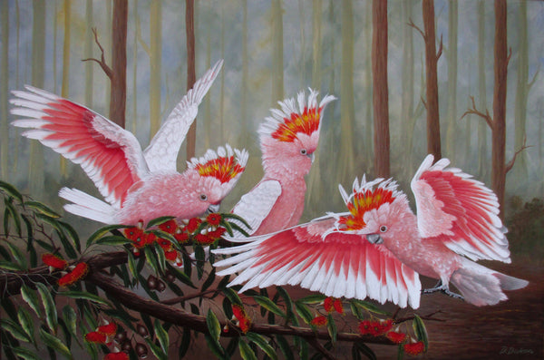 Major Mitchells Cockatoos - Limited Edition Giclee Print, Limited Edition Print by Debra Dickson Artist