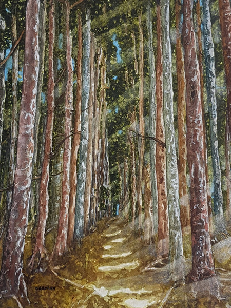 Woodland Walk, Watercolour Painting by Debbie Brophy Artist