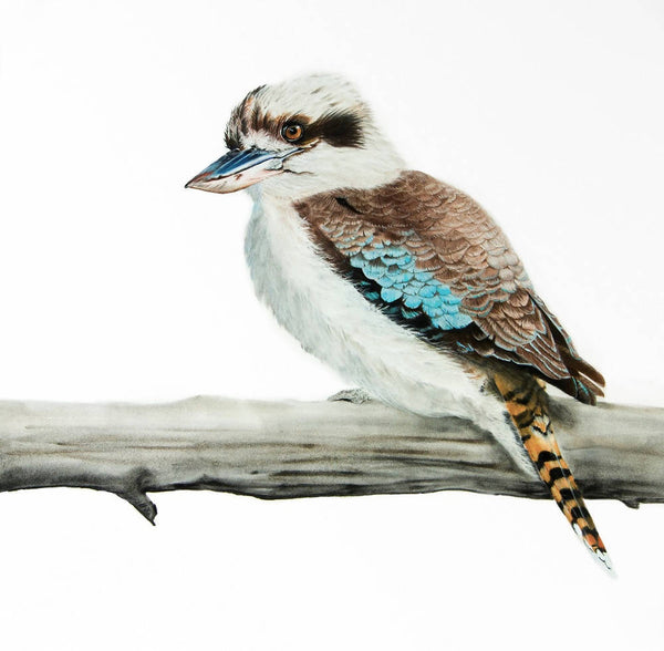 Kevin the Kookaburra - Original Painting, Mixed Media Painting by Johanna Larkin Artist