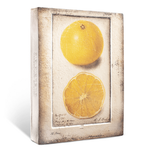 """Citron"" by Sid Dickens"