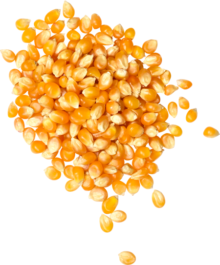 Organic Popping Corn 500g - Family Pantry