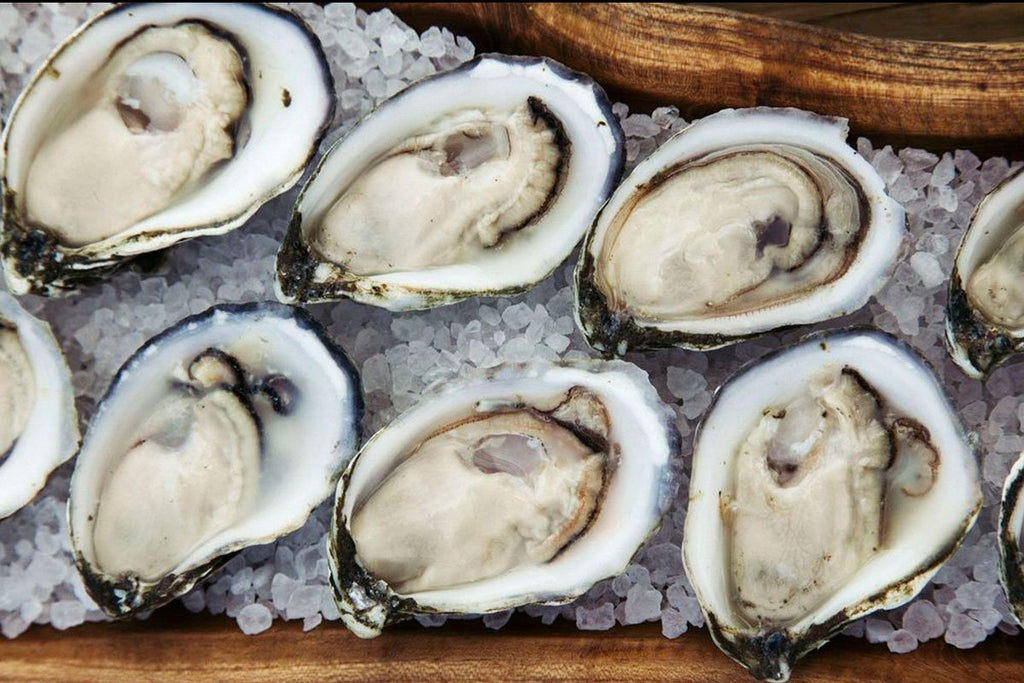 Live Barnstable Oysters - Cape Cod, MA - Docena