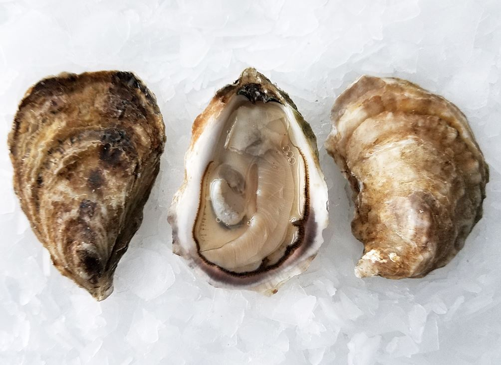 Premium Shipwreck Select Oysters -  South Lake, PEI - Docena