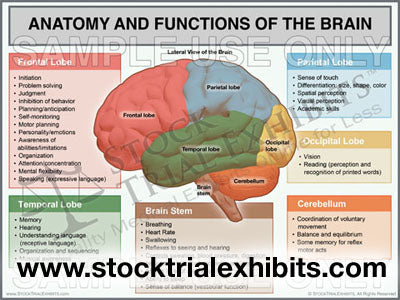 Brain Anatomy and Injury Stock Trial Exhibits in 2020