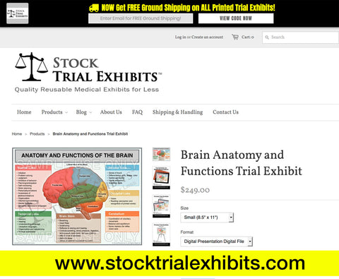 cost effective brain-anatomy-and-functions-trial-exhibit