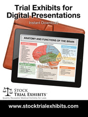 Digital Presentation Brain Anatomy and Functions Trial Exhibit Stock Medical Illustration