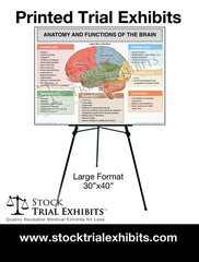 Printed Large Format Brain Anatomy and Functions Trial Exhibit Stock Medical Illustrations