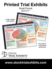 Printed Small Format Brain Anatomy and Functions Trial Exhibit Stock Medical Illustrations