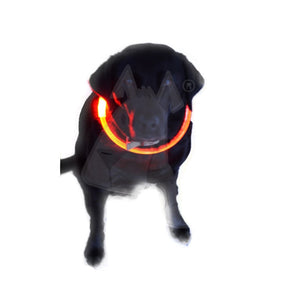 Flashy Fido Dog Collar