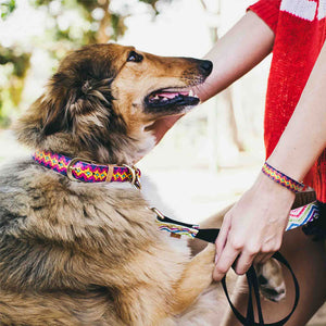 The Pampered Pooch Dog Collar