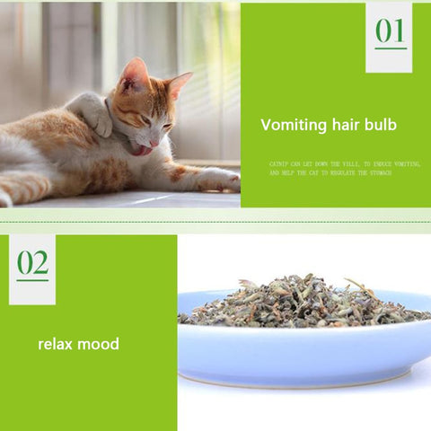 Image of Premium Catnip Hot Sale Cat Mint Natural Pet Food Organic Funny Toy