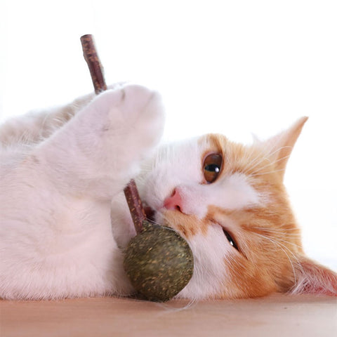 Image of Pet Natural Cat Catnip Treat Balls Cat Toys Menthol Flavor Kitten Treat Ball Cats Playing Cleaning Teeth Chasing Toy
