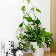 Load image into Gallery viewer, Plant Wall Climbing Hooks