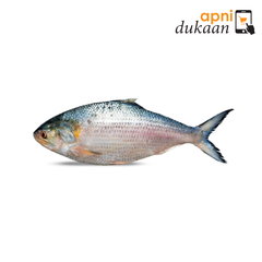 Bangladeshi Hilisha Fish (Size 12 - Approx 1.2kg) Whole - Apni Dukaan
