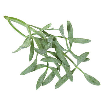 Sea Fennel (1 x 50 g)