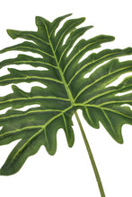 Load image into Gallery viewer, Philodendron Leaves 80cm (Set of 5)