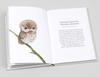 Owls, Our Most Charming Bird by Matt Sewell