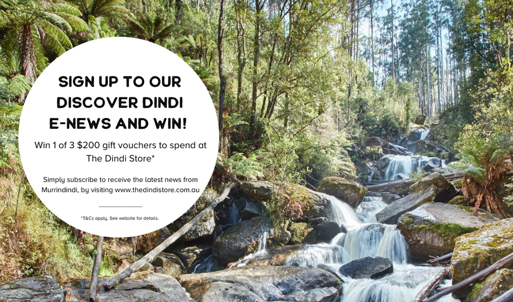 Sign up to the new Discover Dindi e-news and win!