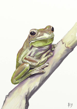Load image into Gallery viewer, Green Tree-frog - Fine Art Print