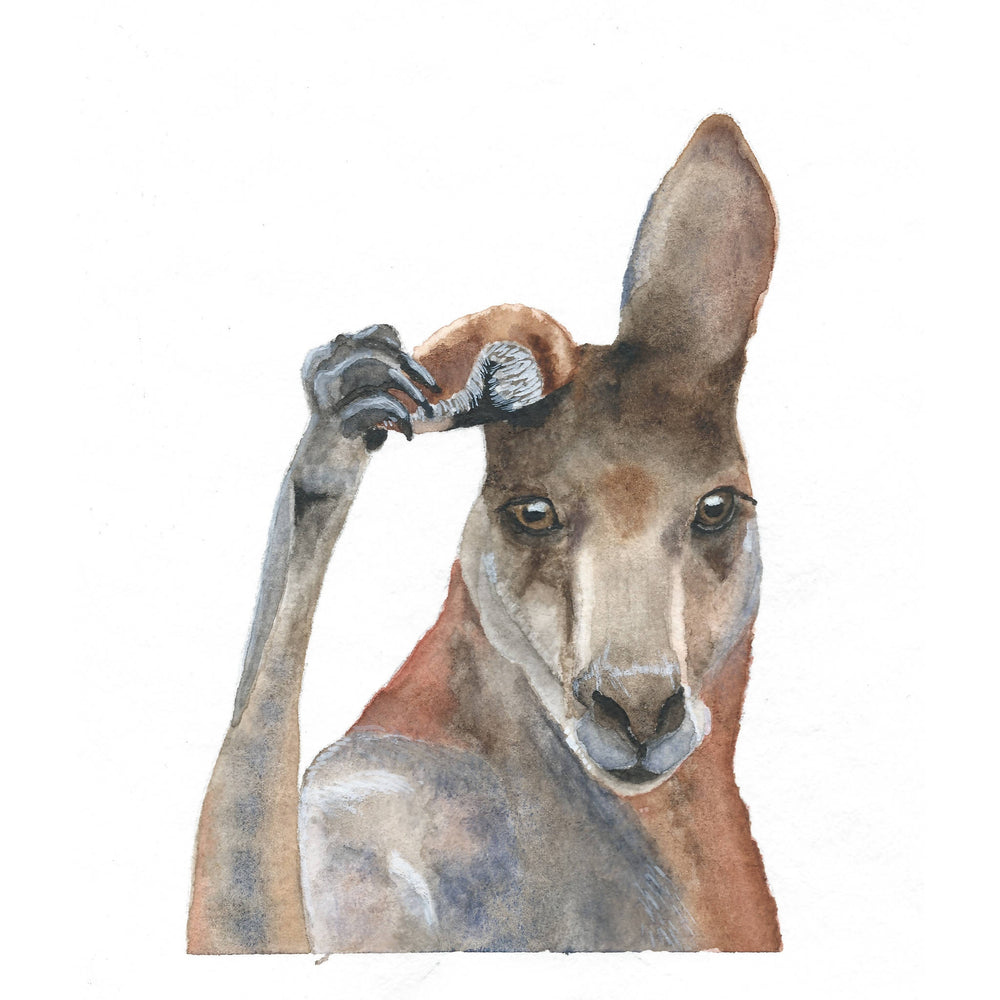 Load image into Gallery viewer, A4 Print - Eastern Grey Kangaroo
