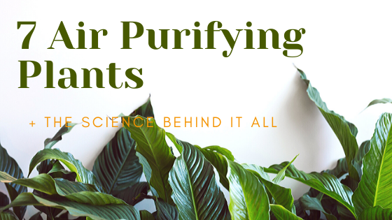 7 Air Purifying Houseplants That Are Easy to Care for (+ the Research)