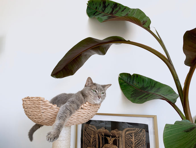10 Cat-Safe Houseplants That Are a Cinch to Grow