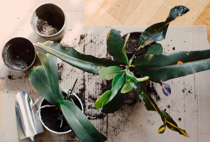 How to Get Rid of Gnats in Indoor Plants Naturally