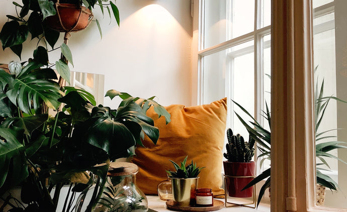 Preparing Your Indoor Plants for Fall Season