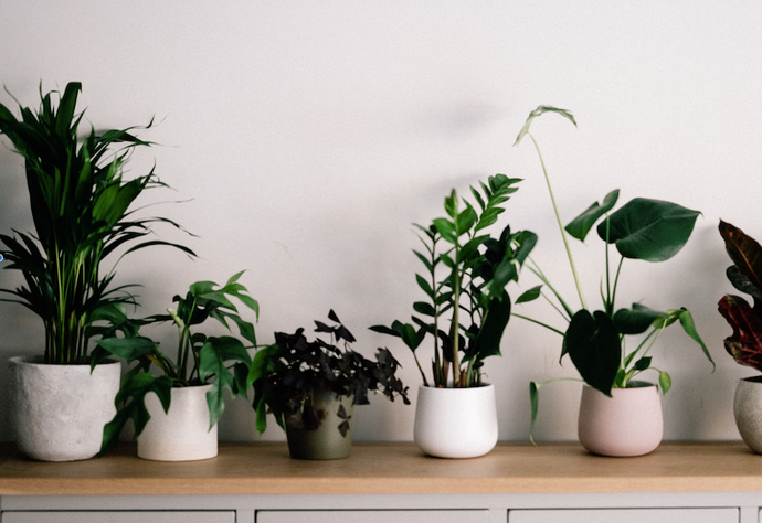 6 Low Light Houseplants Fitting For That Darker Room