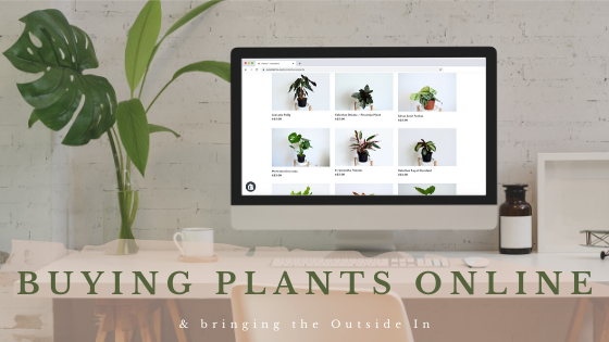 Ordering Houseplants Online: A Guide on Bringing the Outside In
