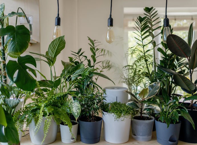 6 Springtime Steps to Support Your Houseplants Through the Seasonal Shift